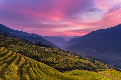 秋「Longji テラスのフィールド Longsheng 、桂林,中国」:スマホ壁紙(19)