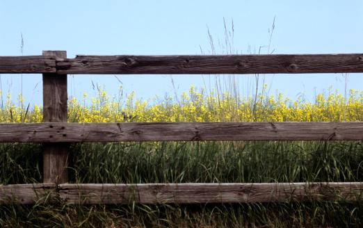 花畑「花の後、フェンス」:スマホ壁紙(2)