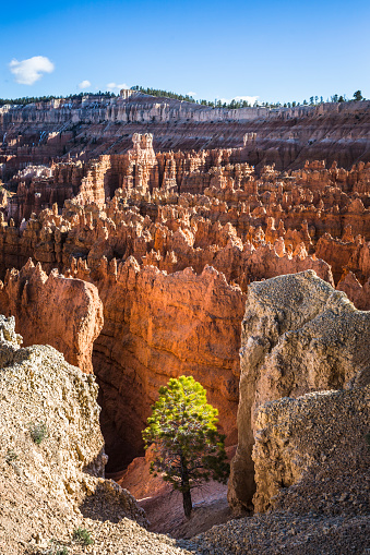 Natural Column「Pine in Bryce Canyon, USA」:スマホ壁紙(3)