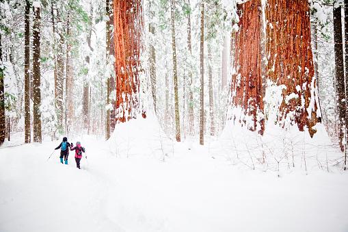 スキー「冬レッドウッズ」:スマホ壁紙(14)