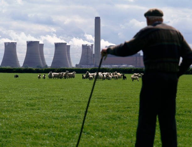 Shepherd, sheep and power station Lincolnshire, United Kingdom:ニュース(壁紙.com)