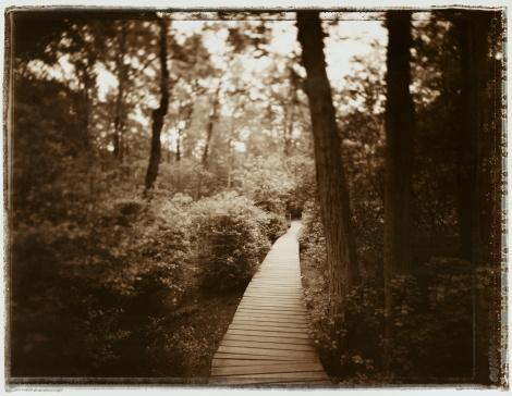 Black And White Instant Print「Boardwalk through swamp, New Jersey, USA (toned B&W)」:スマホ壁紙(19)
