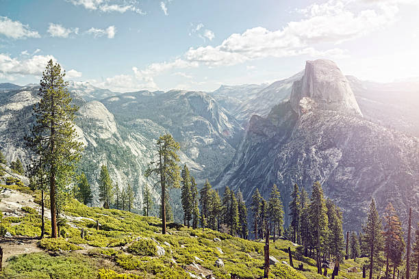 half dome in yosemite with foreground trees:スマホ壁紙(壁紙.com)