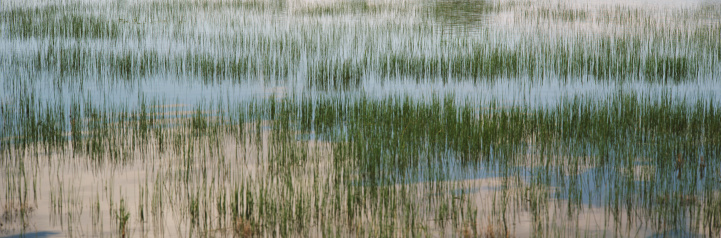 Carson National Forest「Grasses growing in lake」:スマホ壁紙(4)