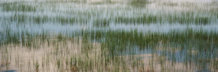 カーソン国有林「Grasses growing in lake」:スマホ壁紙(3)