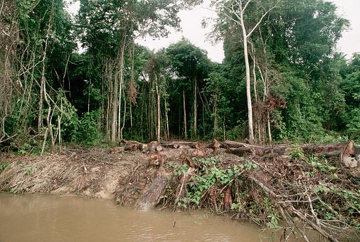 Deforestation「Forest Clearance on the Shores of the Javari River」:スマホ壁紙(8)
