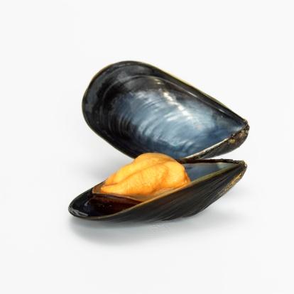 Mollusk「Mussel opend, close-up」:スマホ壁紙(11)