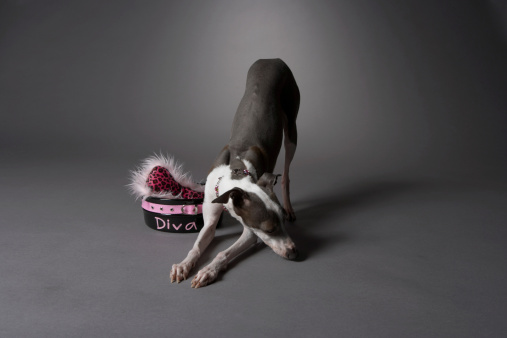 High Society「Dog sniffing floor with diva bowl」:スマホ壁紙(8)