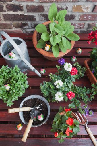 ペチュニア「Germany, Plants for the balcony」:スマホ壁紙(12)