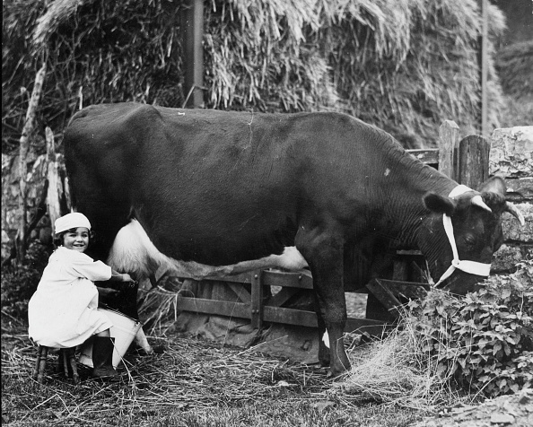 Cow「Young Dairymaid」:写真・画像(19)[壁紙.com]