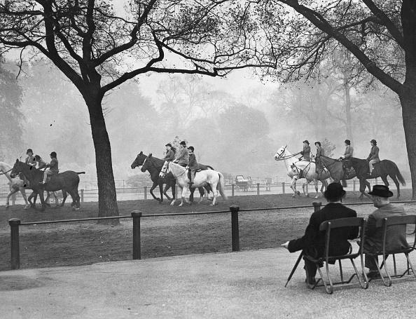 Domestic Animals「Riding In Park」:写真・画像(14)[壁紙.com]