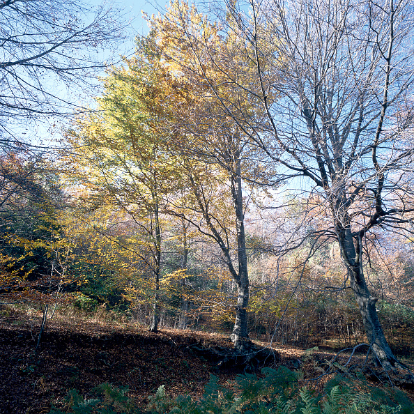 葉・植物「Mediterranean forest」:写真・画像(10)[壁紙.com]