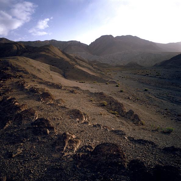 No People「Mediterranean forest」:写真・画像(3)[壁紙.com]