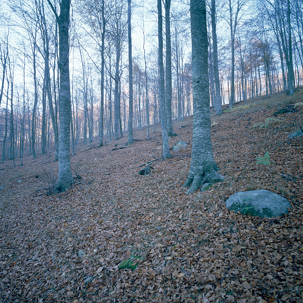 Photographic Effects「Mediterranean forest」:写真・画像(19)[壁紙.com]