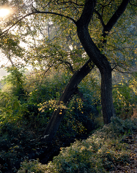 葉・植物「Mediterranean forest」:写真・画像(16)[壁紙.com]