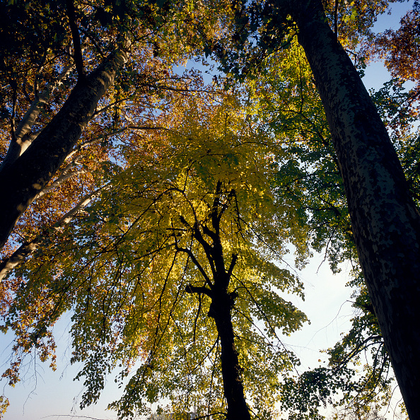 Beech Tree「Mediterranean forest」:写真・画像(19)[壁紙.com]
