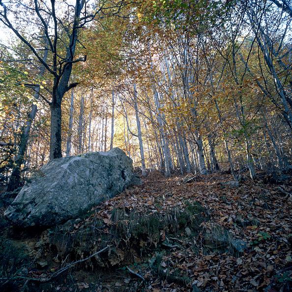 Beech Tree「Mediterranean forest」:写真・画像(14)[壁紙.com]