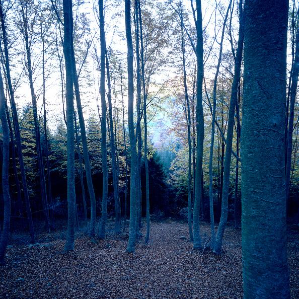 Beech Tree「Mediterranean forest」:写真・画像(10)[壁紙.com]