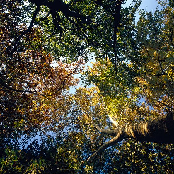 Beech Tree「Mediterranean forest」:写真・画像(15)[壁紙.com]