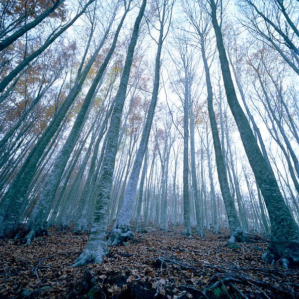 葉・植物「Mediterranean forest」:写真・画像(17)[壁紙.com]