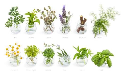 Thyme「Mediterranean cuisine fresh herbs」:スマホ壁紙(2)