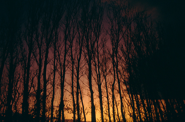 Uncultivated「Mediterranean forest at night on fire」:写真・画像(16)[壁紙.com]