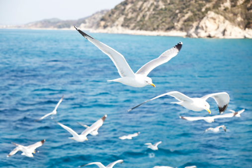 Mt Athos Monastic Republic「Mediterranean Sea」:スマホ壁紙(10)