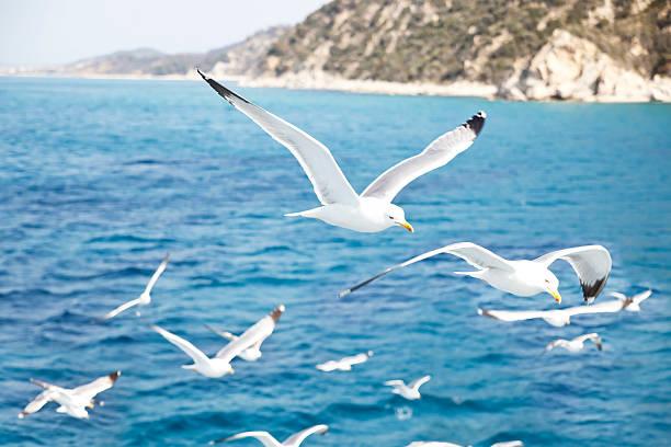 Mediterranean Sea:スマホ壁紙(壁紙.com)