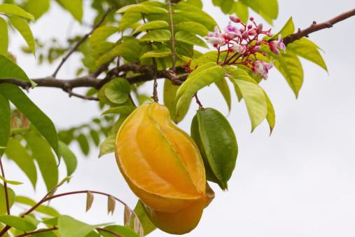 Starfruit「Star Fruit」:スマホ壁紙(13)