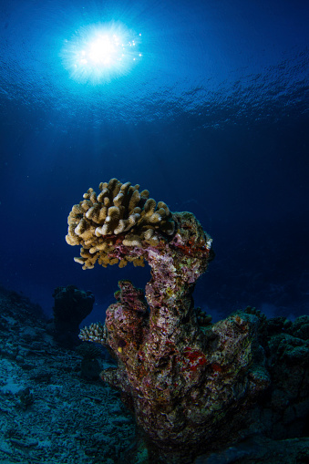 Green Turtle「Hard coral, Maldives.」:スマホ壁紙(0)