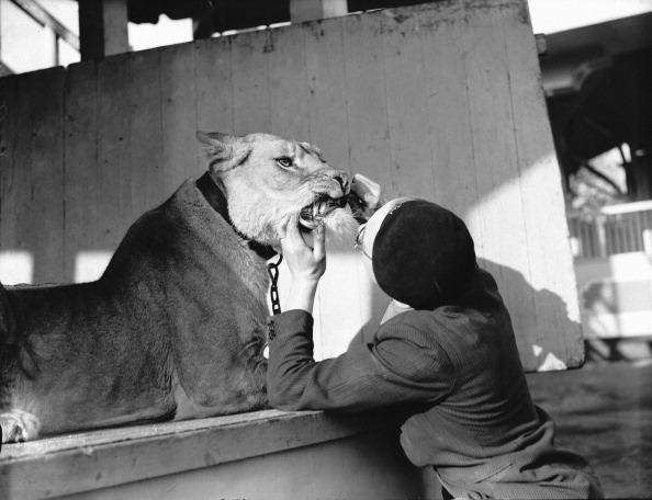 Fred Morley「Tornado Smith's Lioness」:写真・画像(17)[壁紙.com]