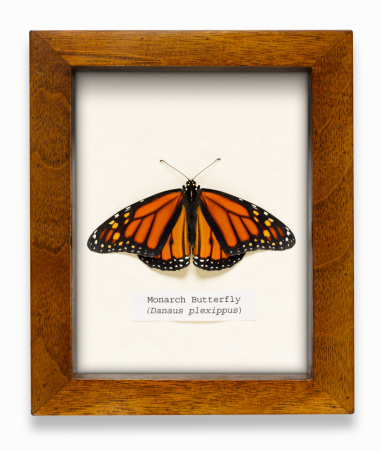 インフルエンザ菌「Monarch butterfly in box (digital composite)」:スマホ壁紙(15)