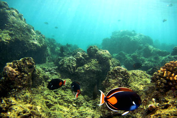 Maui「Coral Reefs In Danger」:写真・画像(1)[壁紙.com]