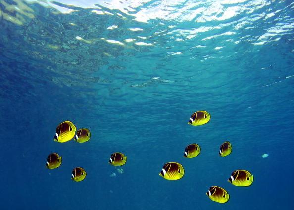 Hanauma Bay「Coral Reefs In Danger」:写真・画像(8)[壁紙.com]