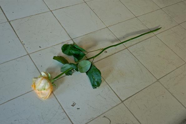 Single Object「Rose On Buchenwald Dissecting Table」:写真・画像(16)[壁紙.com]