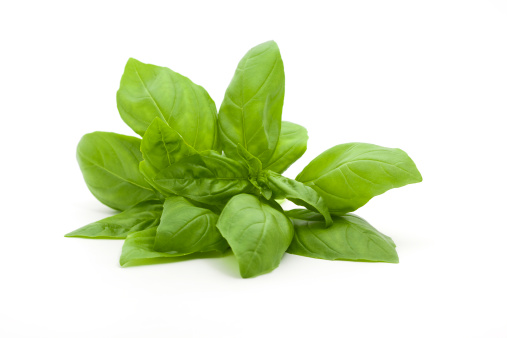 Basil「A small bunch of fresh basil against a white background」:スマホ壁紙(10)