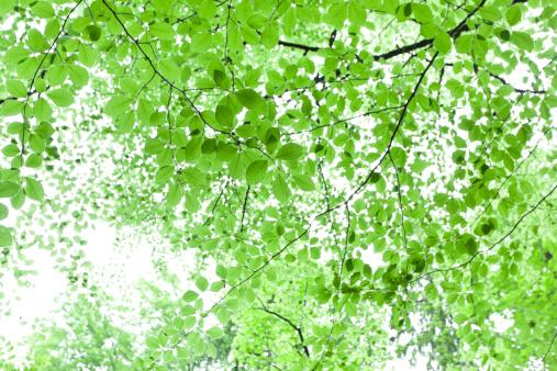 葉「鮮やかなグリーンの緑の背景」:スマホ壁紙(19)