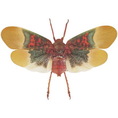 虫・昆虫「Red Fly With Green And Yellow Wings」:スマホ壁紙(9)