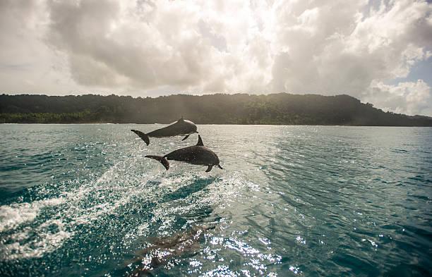 水面のイルカのまとめ:2011年09月23日(壁紙.com)