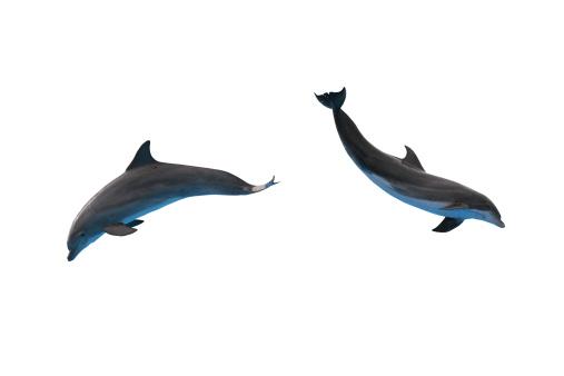 イルカ「2 つのイルカ白で分離」:スマホ壁紙(13)