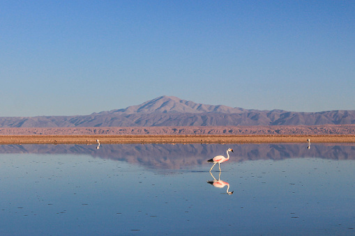 San Pedro De Atacama「Lake in the Atacama desert, Chile, with flamingos.」:スマホ壁紙(10)