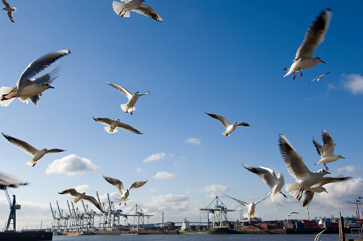 Flock Of Birds「Germany, Hamburg, Port of Hamburg, seagulls flying」:スマホ壁紙(13)