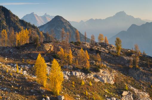 Larch Tree「Subalpine Larch North Cascades Washington」:スマホ壁紙(10)
