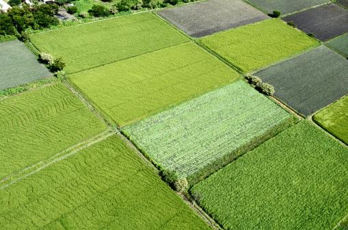 Patchwork Landscape「Farm Fields at Morelos」:スマホ壁紙(17)