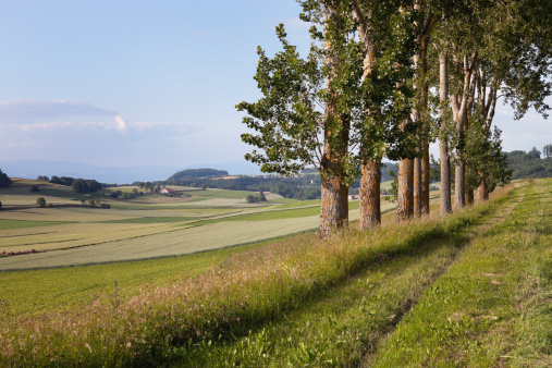 Vaud Canton「Row of Trees on a Summer Evening」:スマホ壁紙(12)
