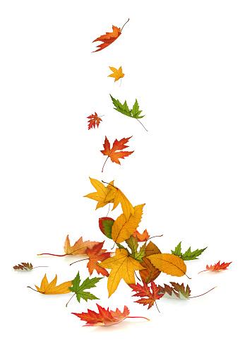 Maple Leaf「Falling」:スマホ壁紙(7)