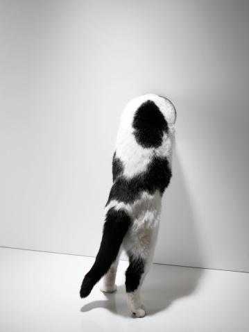 好奇心「猫の上に立つ壁に前足雰囲気」:スマホ壁紙(17)