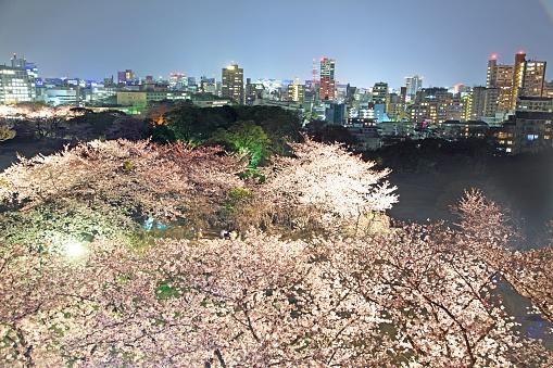 Sakura Matsuri「Japan, Cherry Blossom Festival」:スマホ壁紙(19)