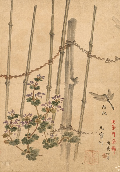 Chrysanthemum「Bamboo Fence And Chrysanthemums」:写真・画像(7)[壁紙.com]