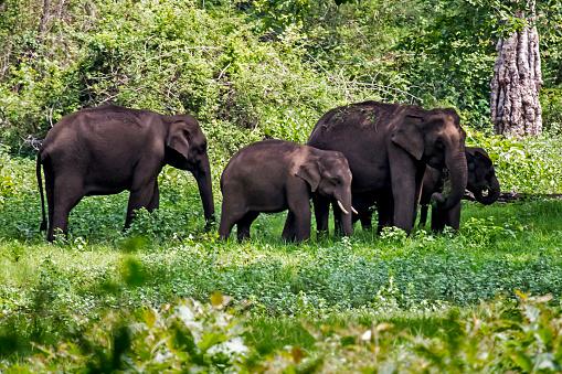 象「Elephant family 1」:スマホ壁紙(11)
